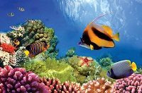 image of the great barrier reef